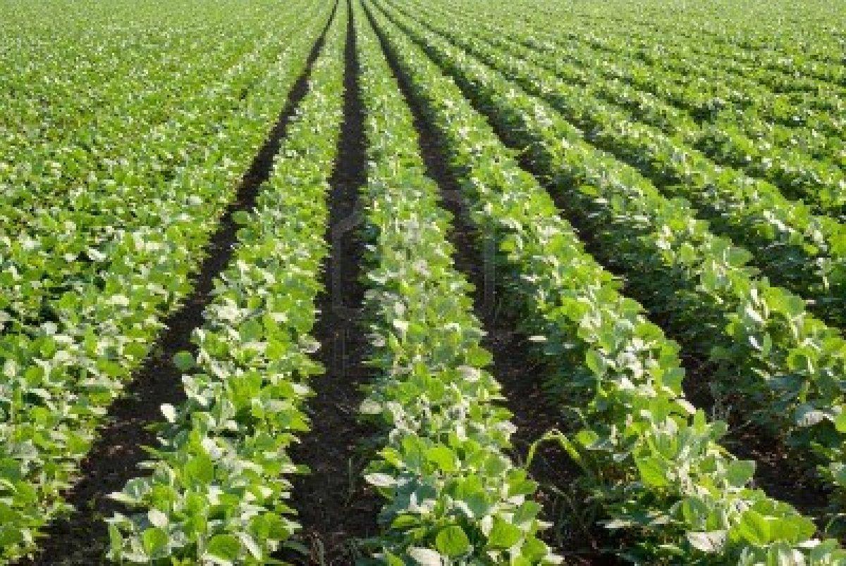 Tavaszi talajelemzés, talajvizsgálat!