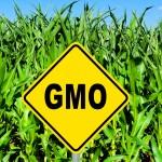 GMO-k a világban: 190 millió hektárról beszélünk
