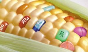 GMO elleni tiltakozás