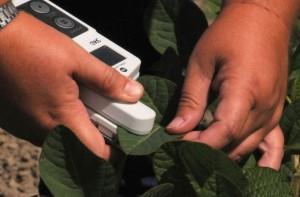 fotoszintezis-hatekonysag-meres